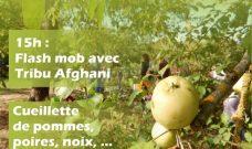 Samedi 13 octobre à partir de 14h30 : Cueillettes d'automne et Flash mob au P'tit Jardin du Local