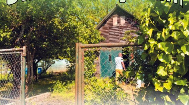 Un été au P'tit Jardin du Local