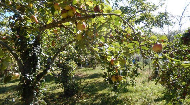 Dimanche 17 octobre 2021 de 12h30 à 17h : pique-nique zéro déchet et un après-midi récolte de fruits d'automne