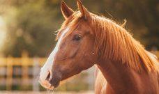 Mardi 26 Octobre : Sortie Famille « A la découverte du cheval »